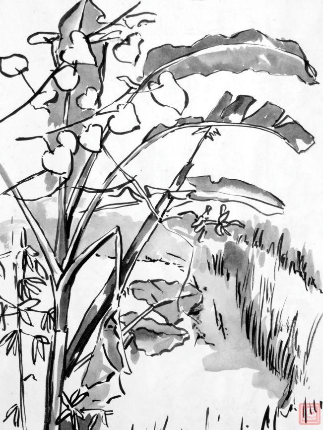 Rice fields by Luke.G
