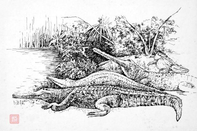 Crocodiles by Luke.G